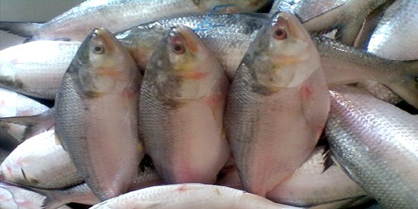 60-day fishing ban to begin in southern districts