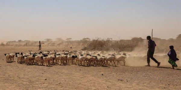 Drought and famine kill 110 in Somalia