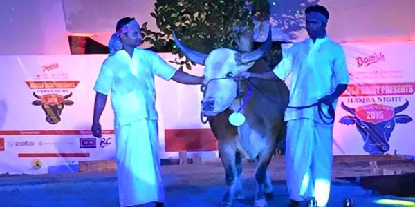 Bangladesh cow class
