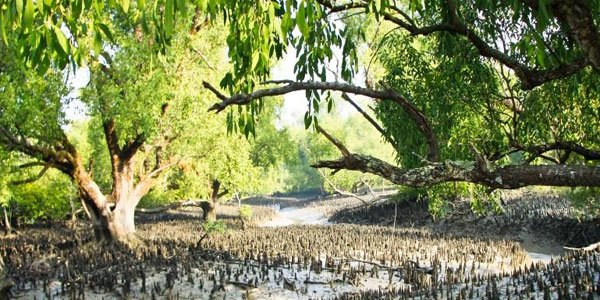 No industry within 10kms of Sundarbans forest