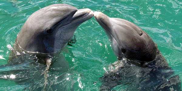Dolphin conservation requires mass awareness in Bangladesh