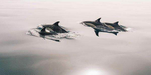 Bangladsh dolphin conservation