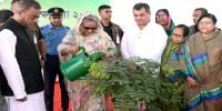'Plant at least three trees to save the environment'